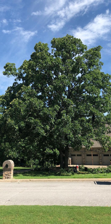 Before Tree
